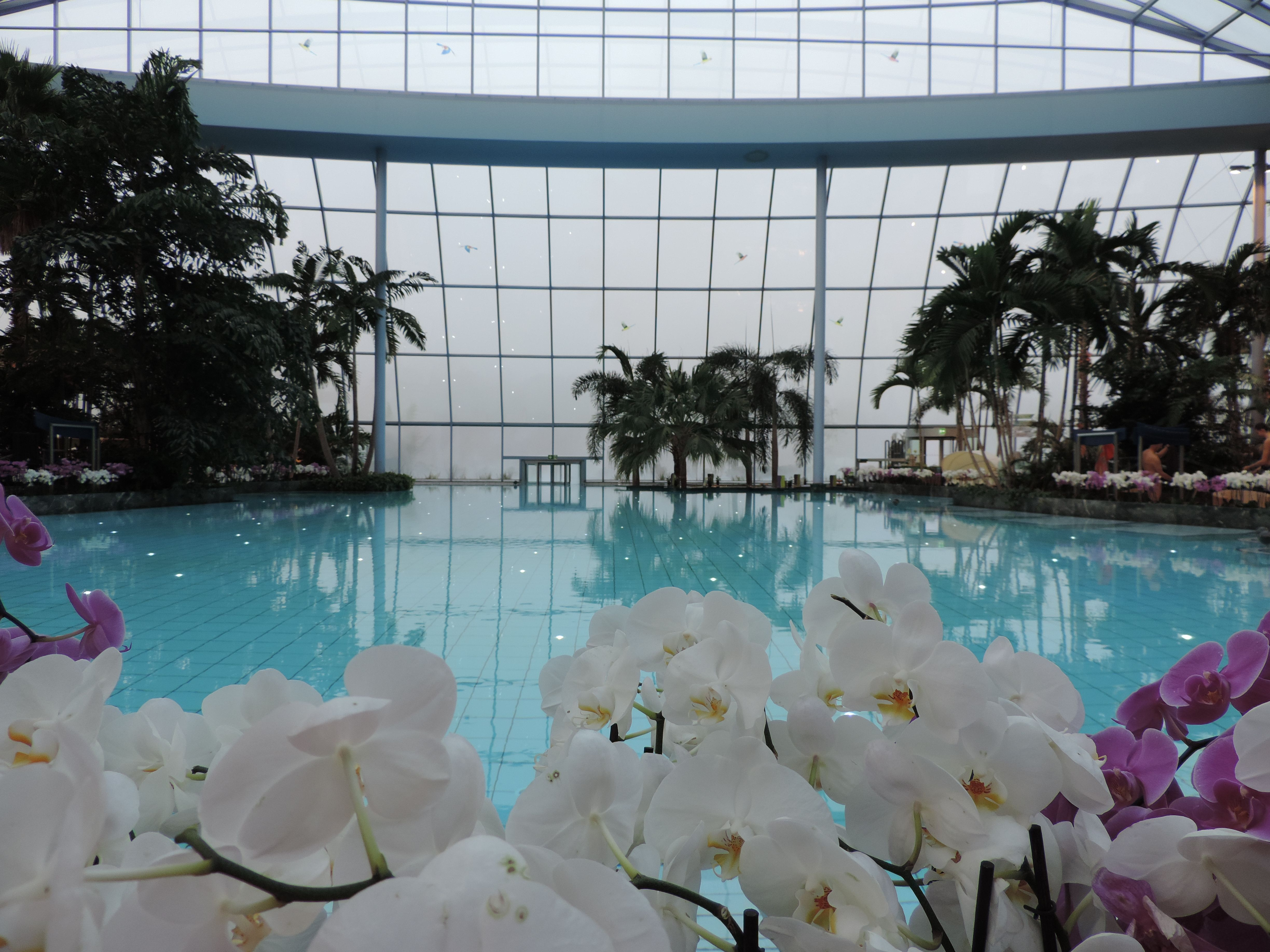 Misty mornings & bright orchids at Thermen und Badewelt Euskirchen.