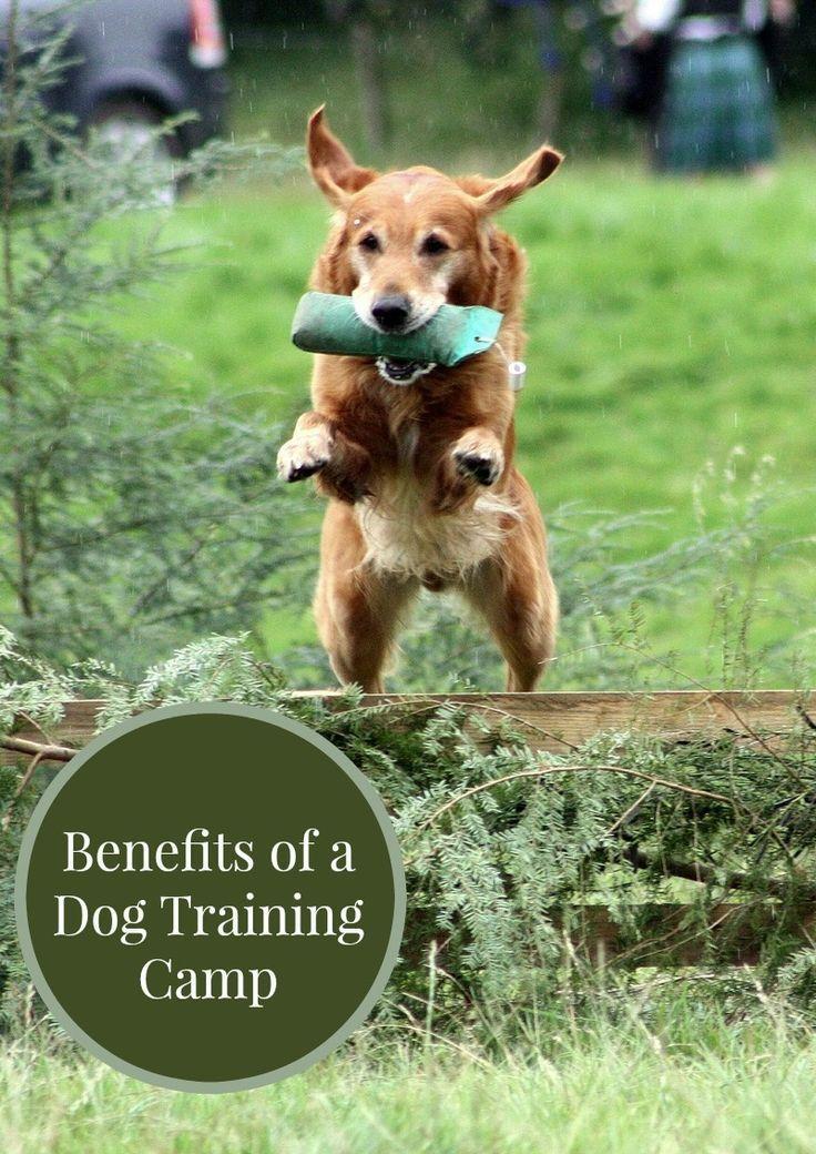 Benefits Of A Dog Training Camp Dog Training Camp Dog Training