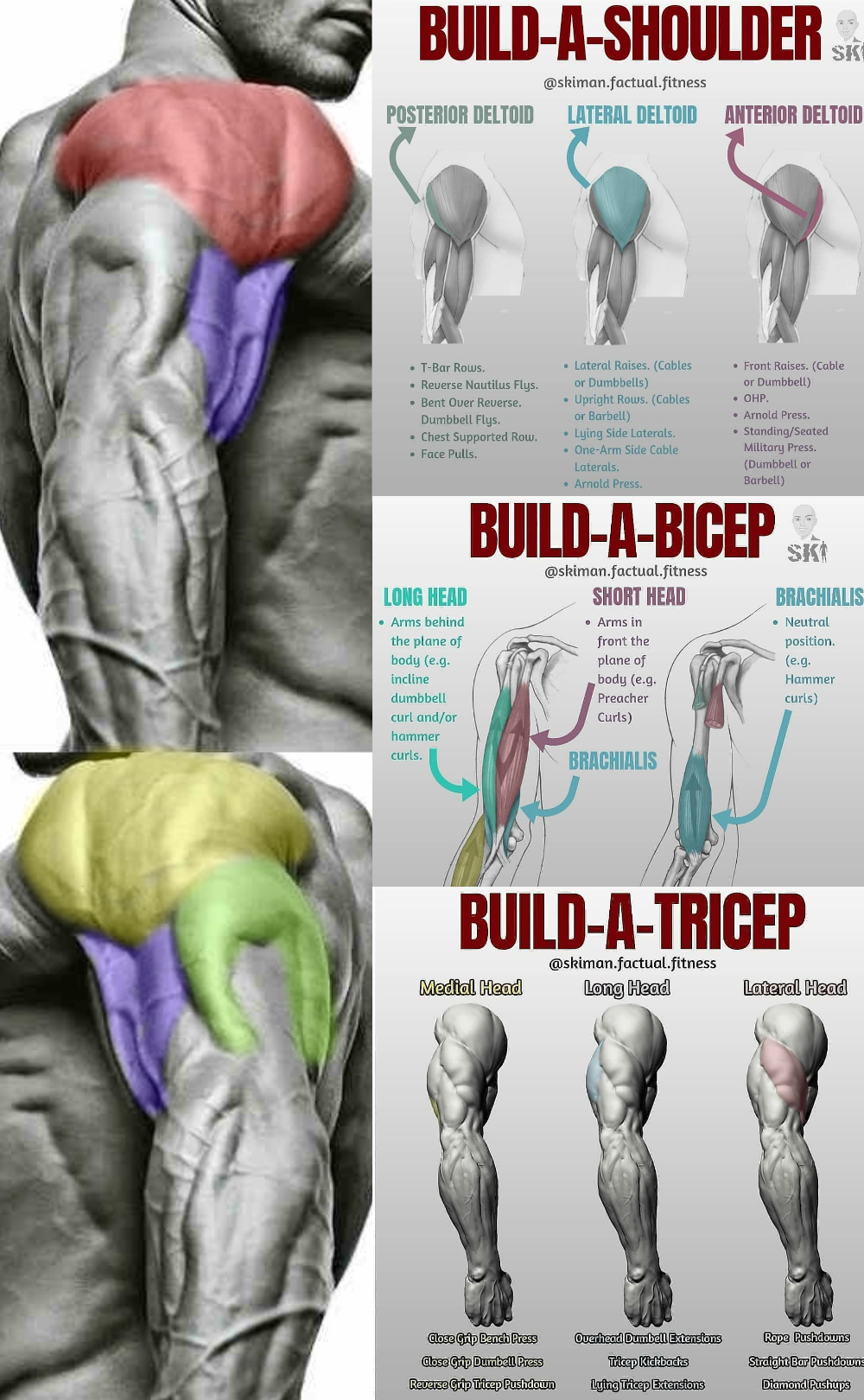 The Best Bulging Bigger Biceps Workout To Grow Your Arms Gymguider Com Big Biceps Workout Biceps Workout Shoulder Workout
