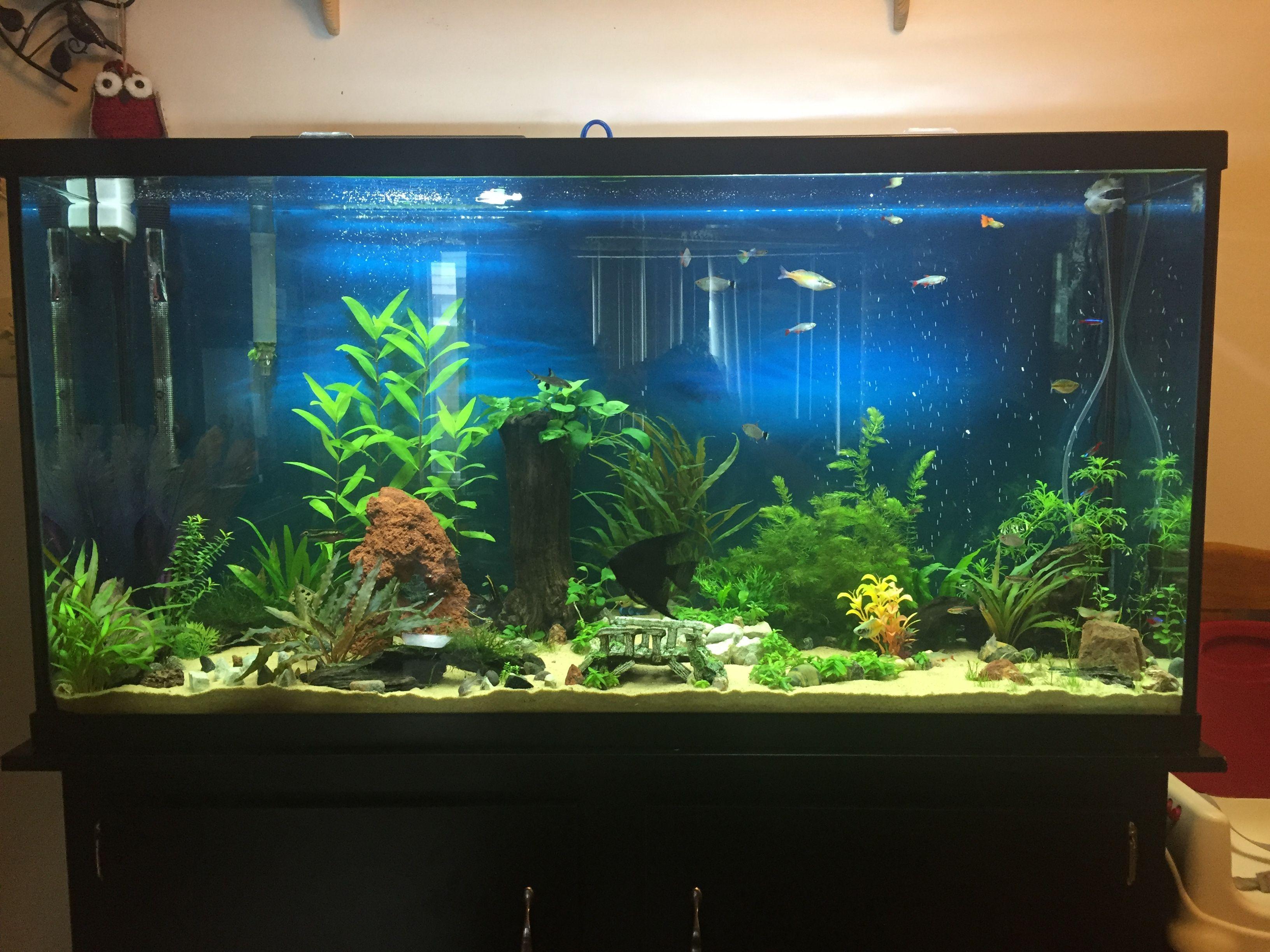 marineland 60 gallon aquarium