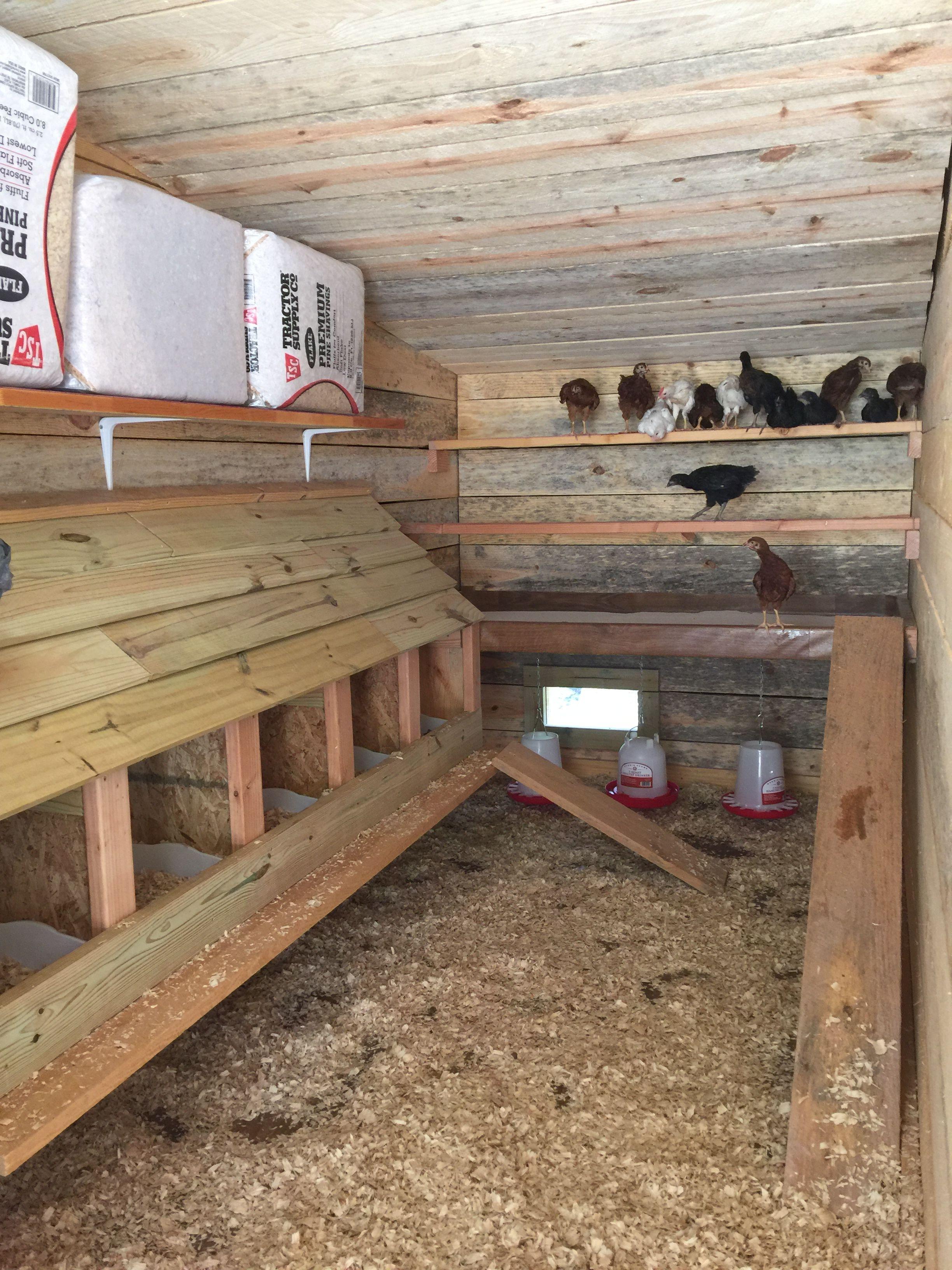 Backyard Chicken Coop Plans Backyard Chicken Coops: Backyard Chicken Coops, Inside Chicken Coop, Easy Chicken Coop