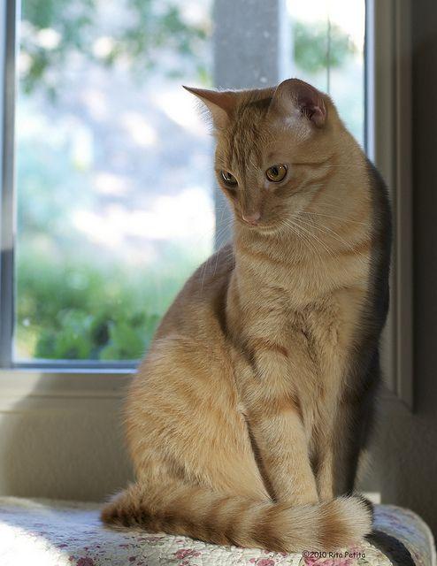 Horatio cat (photo by Rita Petits)