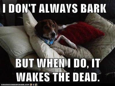 Life With Beagle Beagles Most Talkative Dog Breed No Woofing Way