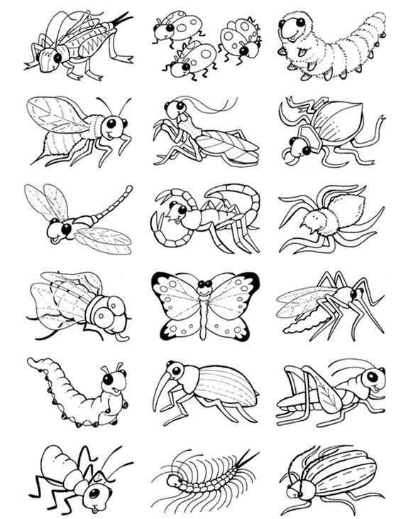 Welcome To Dover Publications Bug Coloring Pages Insect Coloring Pages Insects Preschool