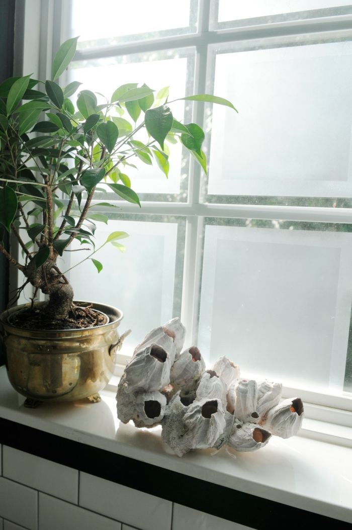 cool fensterbank deko bonsai pflanzen dekoideen Check more at