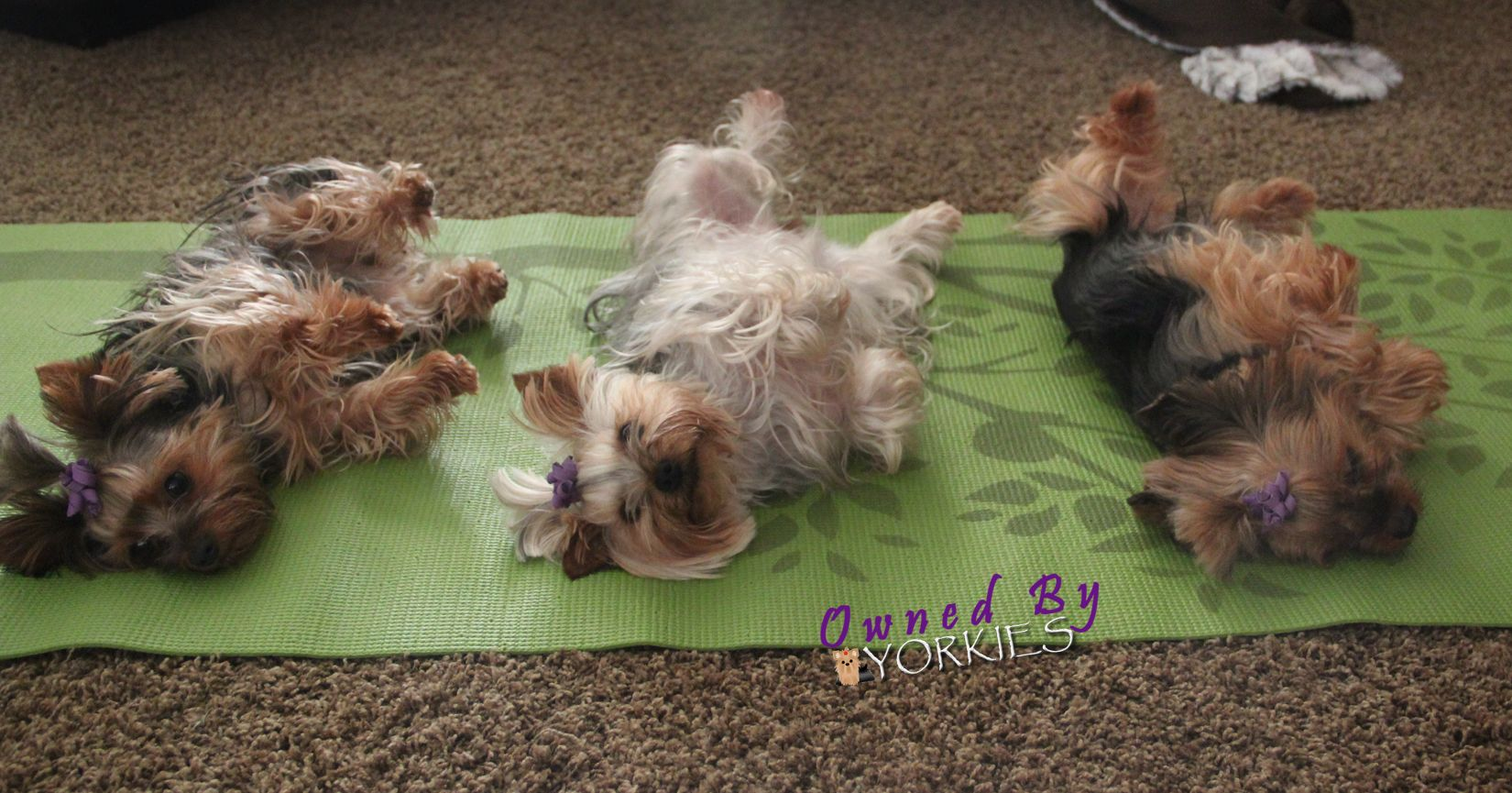 Doing some DOGA! That's the yoga may I have!