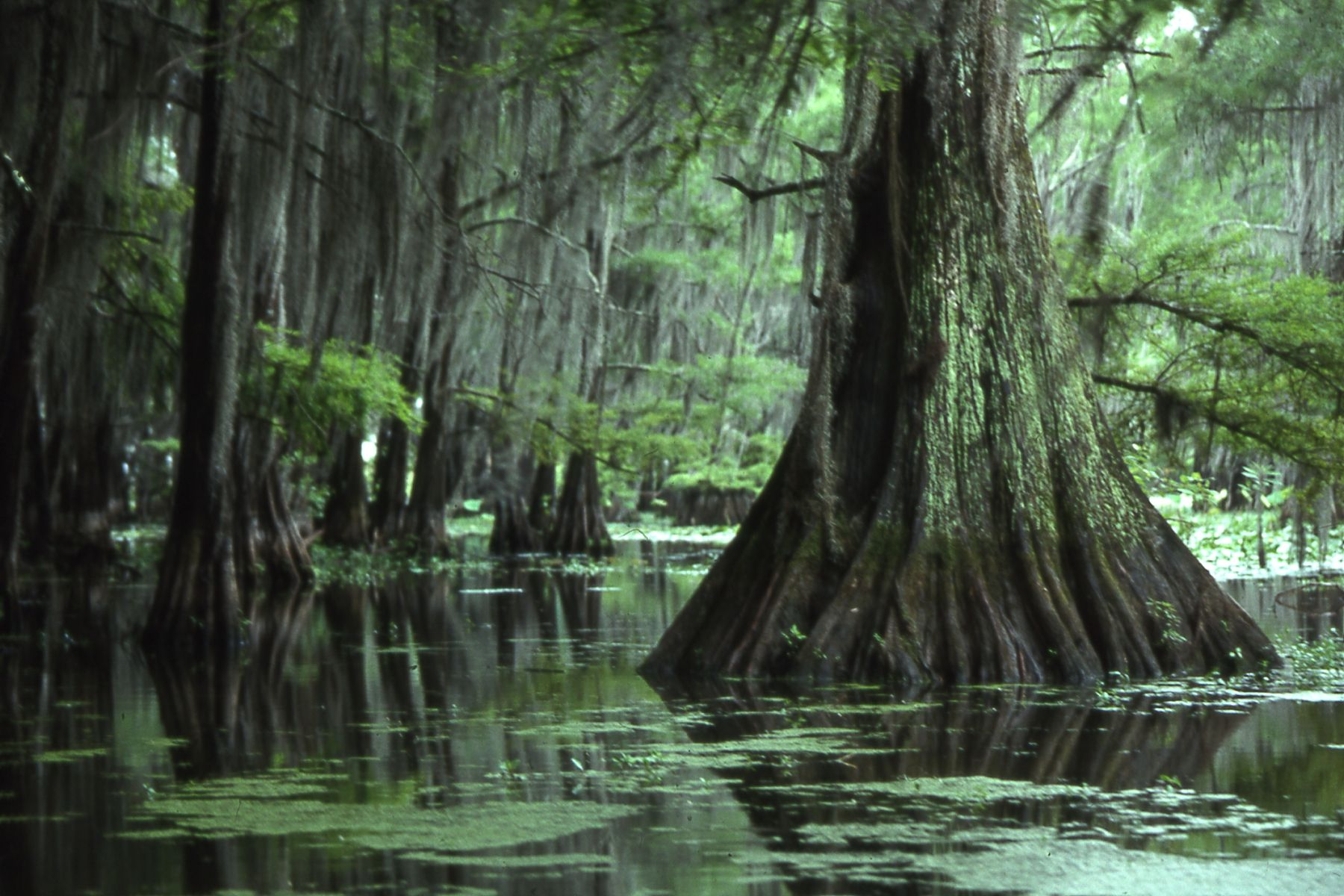 Canoeing at Caddo Lake, TX | The Beauty of Canoeing | Pinterest
