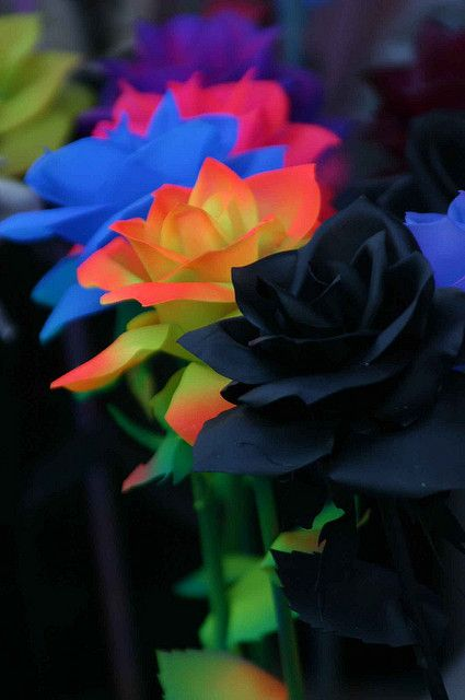 Rosas Azules Amarillas Negras By Terescova Via Flickr Flowers