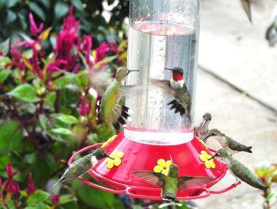 best 1 hummingbird feeder best hummingbird feeder 2016 best - grifflose küche ikea