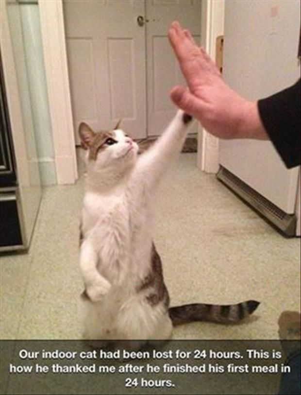 Cats Tap You For Petting