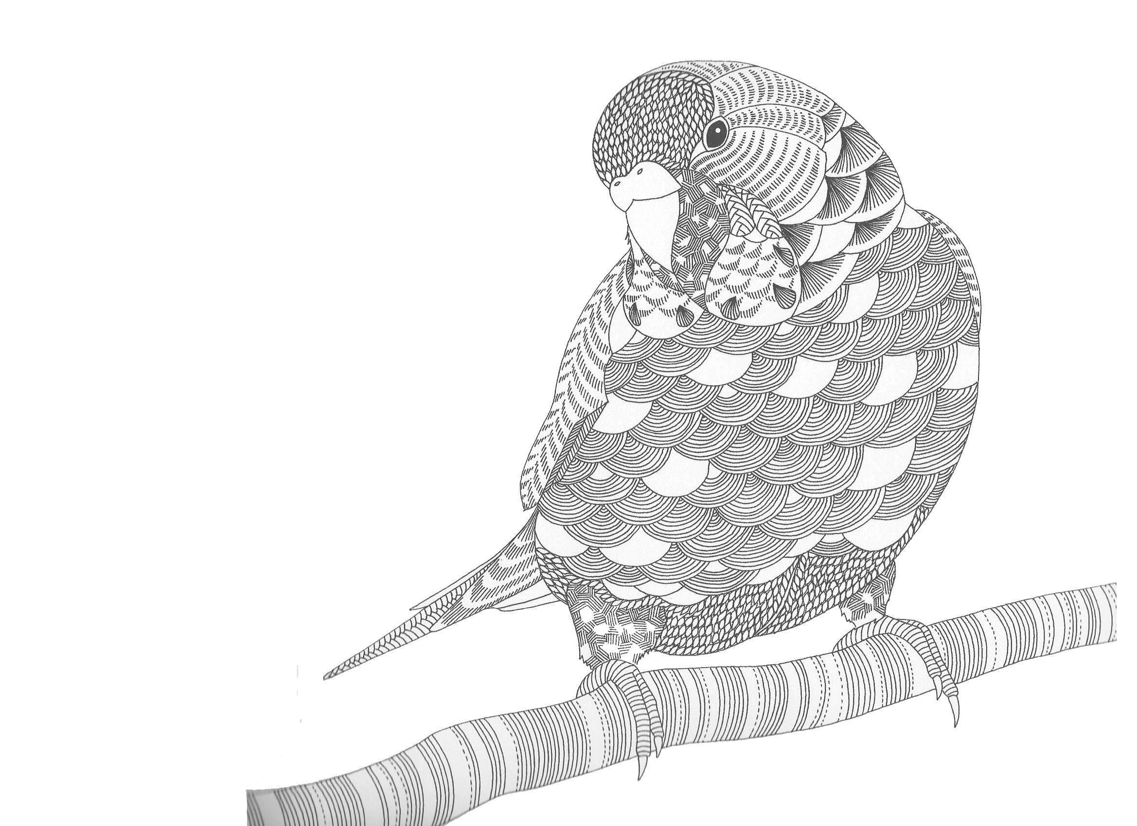parkiet kleurplaten kleurboek vogels