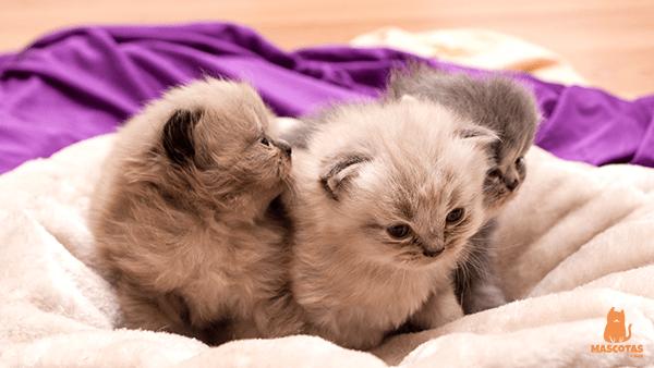 Gatos Características Razas Y Cuidados Mascotas Y Más En 2020 Gatitos Adorables Razas De Gatos Gato Persa