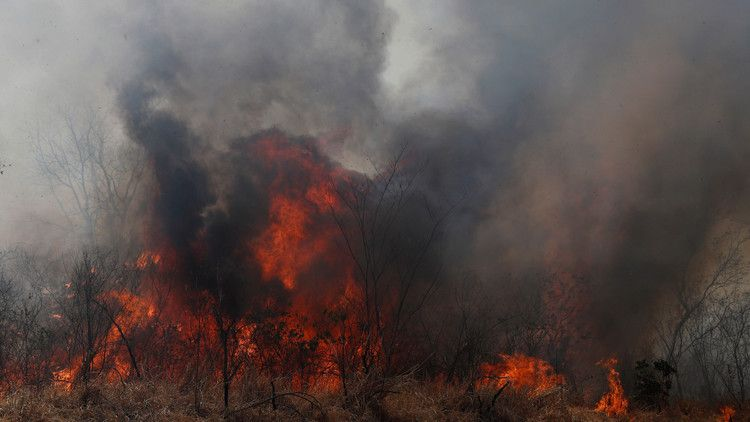 Bolivia S Forest Fires Have Left More Than 2 Million Animals Dead
