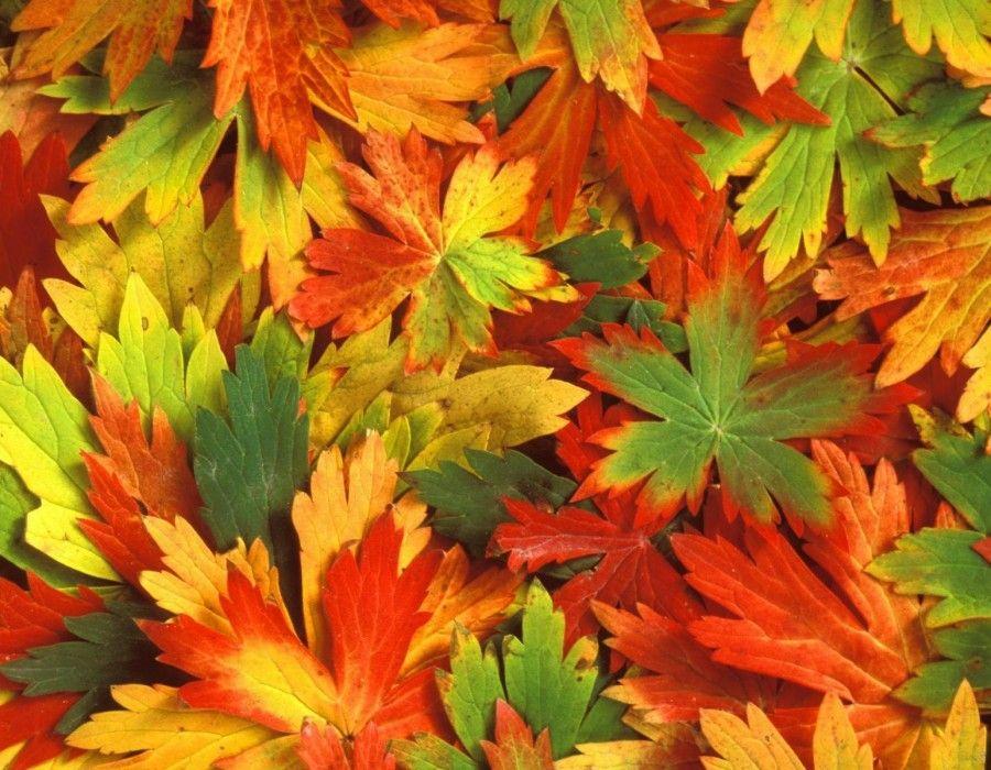 szezonban, ősszel, természet, fotózás