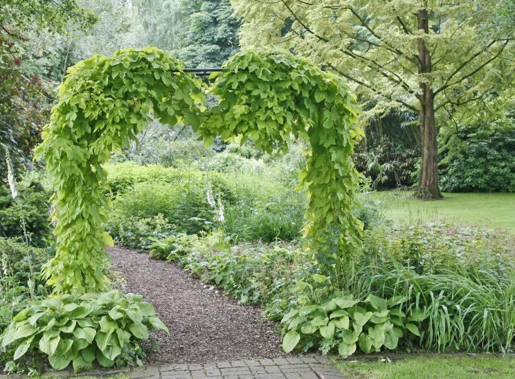 Hopfen Garten