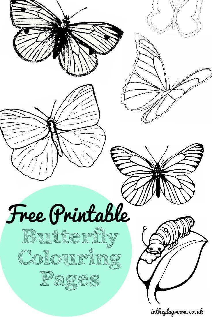 Free Printable Butterfly Colouring Pages | Pinterest | Printable ...