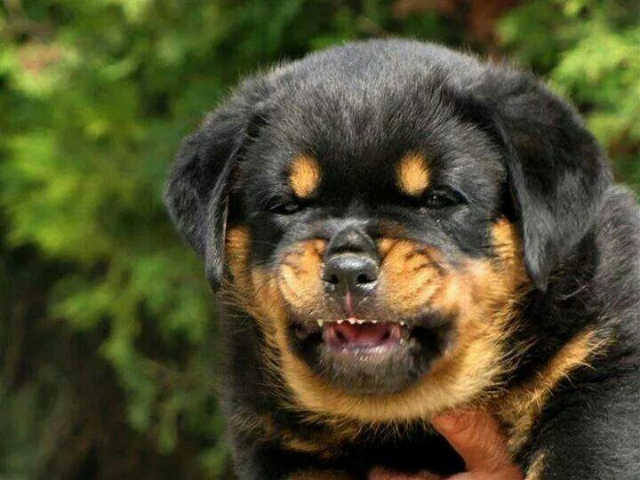 I Said No Dogs Bulldog Breeds