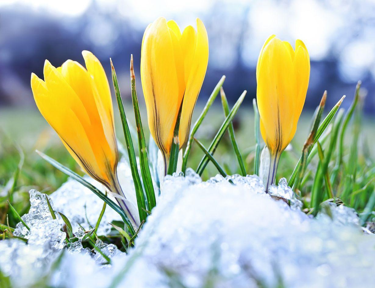 Milloin Kevät Alkaa