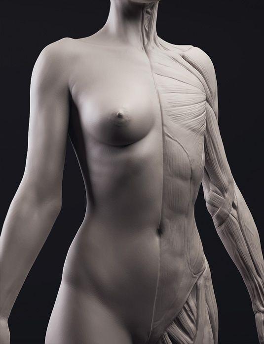 Anatomy part 1: Sculpting the torso | Pinterest | Anatomía ...