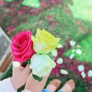 Pin By Maimoona Sadiq On Stylish Dpzz Flowers Holding Flowers Rose