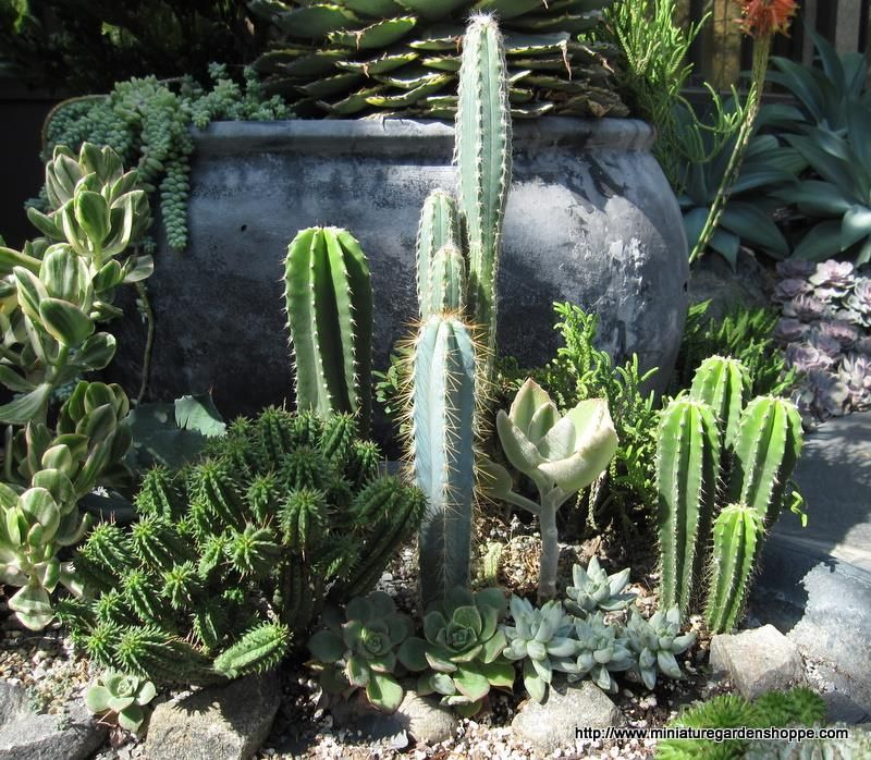 Perfect Cactus And Succulent Garden