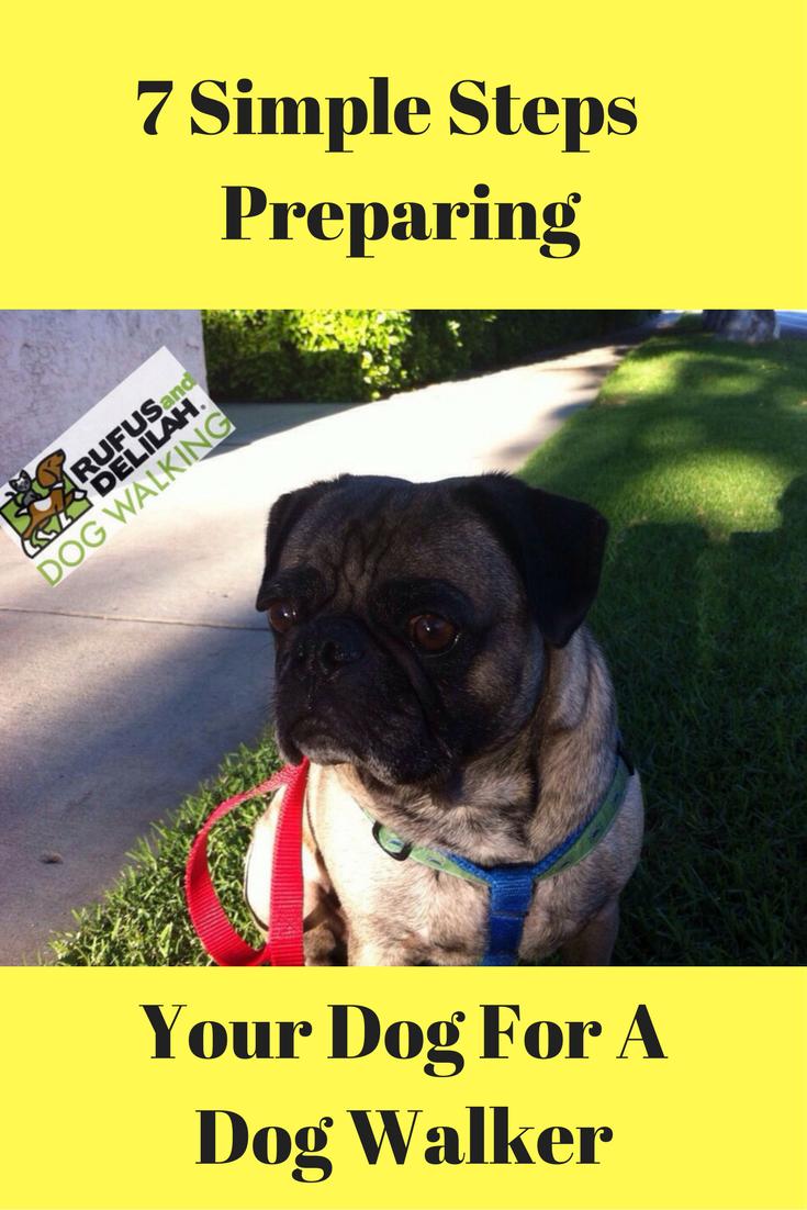 7 Simple Steps Preparing Your Dog For A Dog Walker Dog Walker Dog Clinic Dog Training Near Me