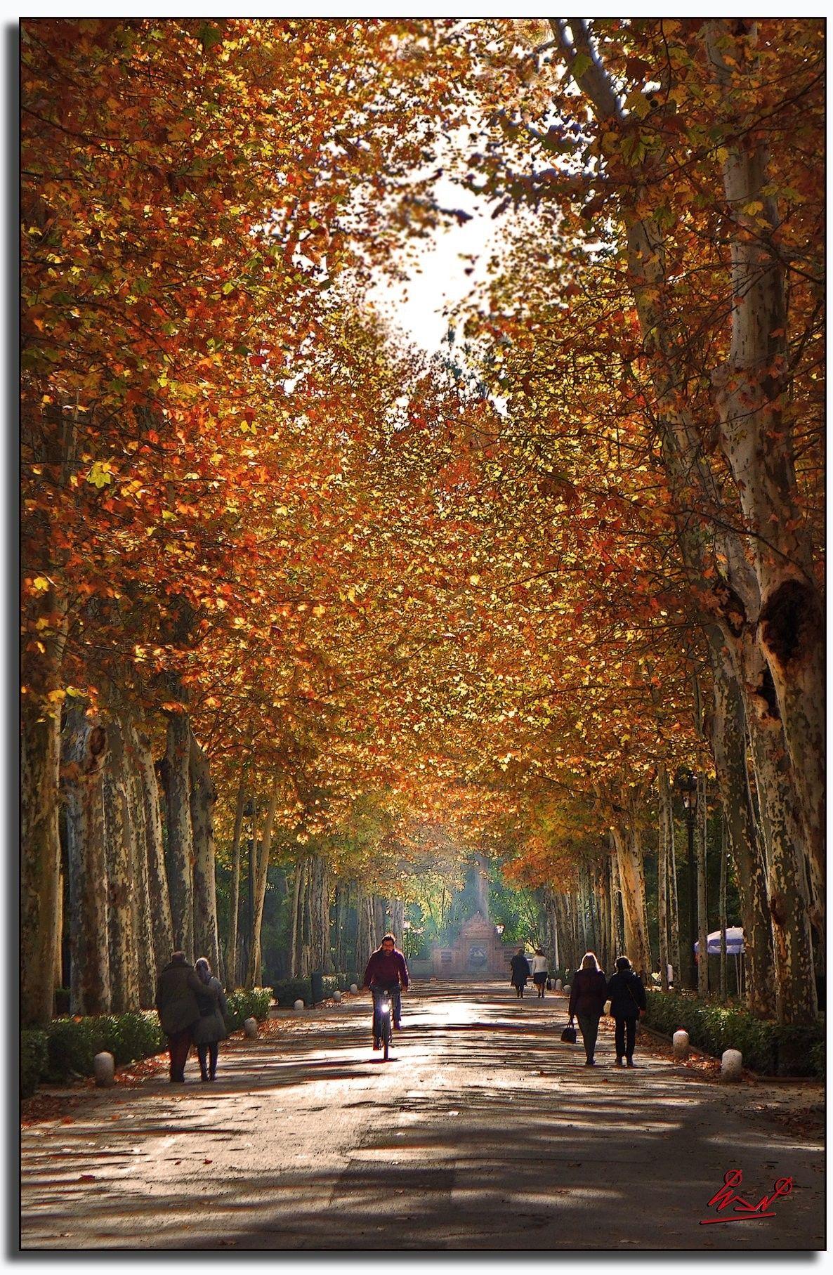 Un Paseo En Una Mañana De Otoño Por El Parque De María Luisa Ciudad De Sevilla Sevilla Paisajes