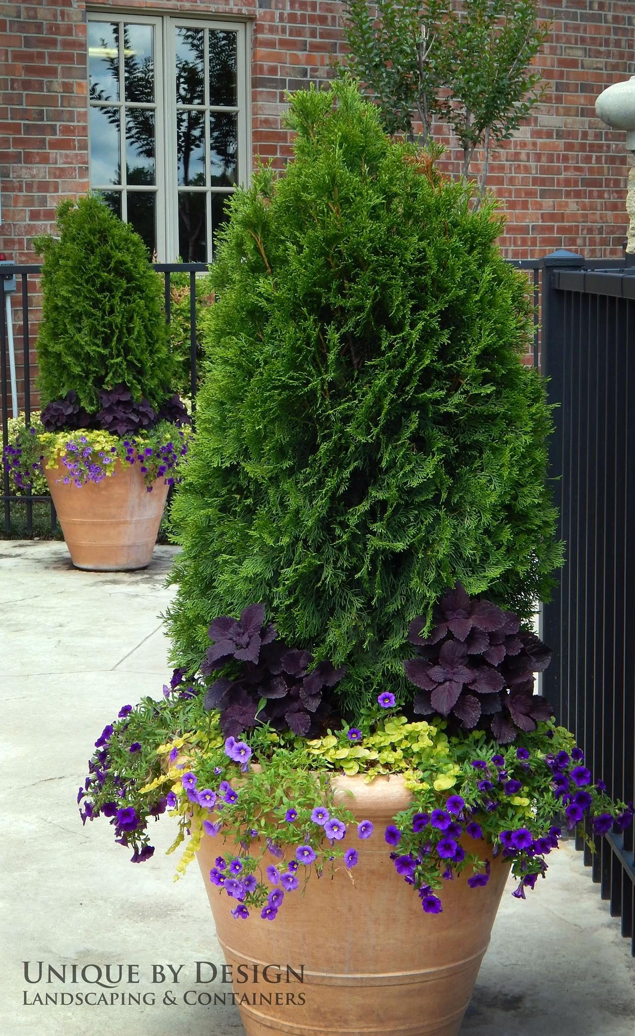 Like The Purple Flowers At The Base Of The Evergreen Container Gardening Plants Garden Containers