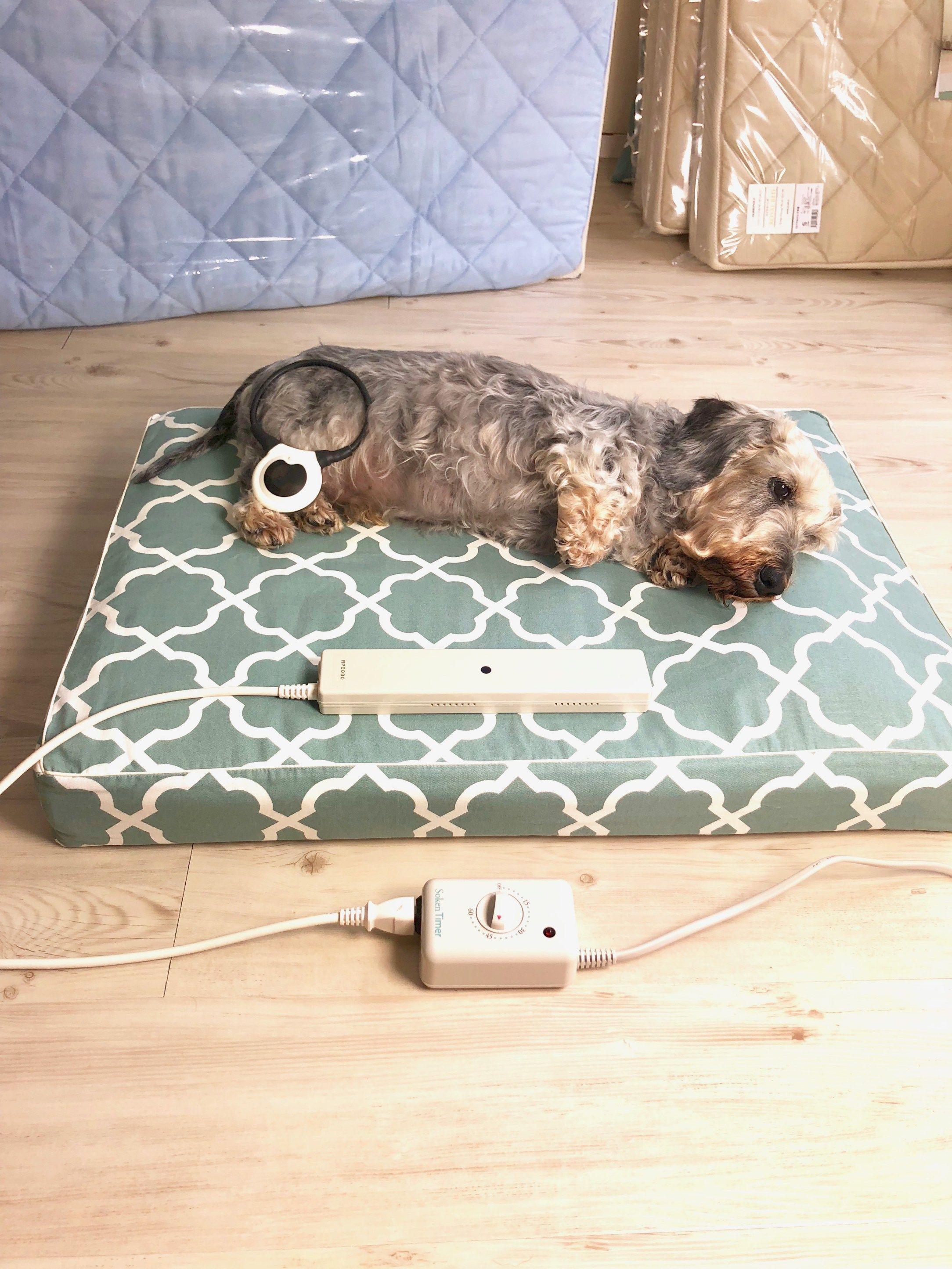 アンビリバボーで話題になった Assisi Loop を入手 犬のベッド アンベルソ公式ブログ 犬 ブログ 大型犬