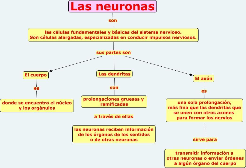 Resultado De Imagen Para Cuadro Esquemático Sobre La Neurona