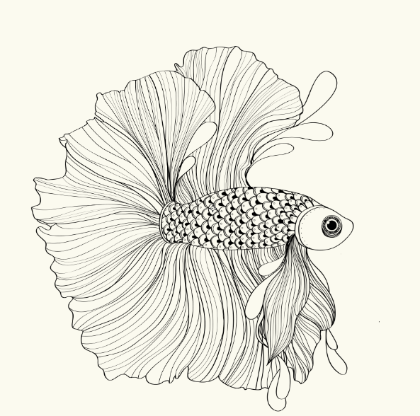 siamese fighting fish all about fish siamese fighting fish Baby Betta Fish siamese fighting fish siamese fighting fish fish tattoos betta fish art lesson plans