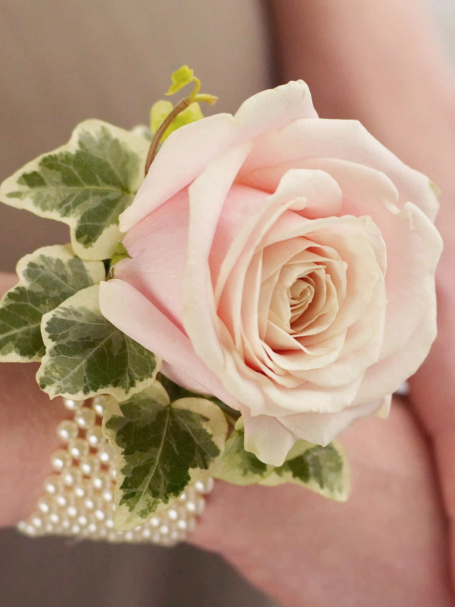 Image Result For Wedding Guest Wrist Corsage