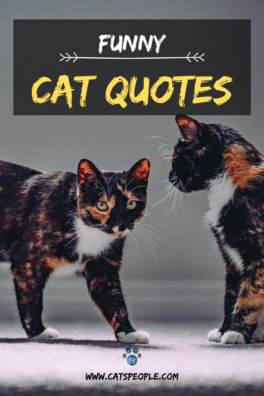 20 Funny Cat Quotes Cat Quotes Funny Cat Quotes Funny Cats