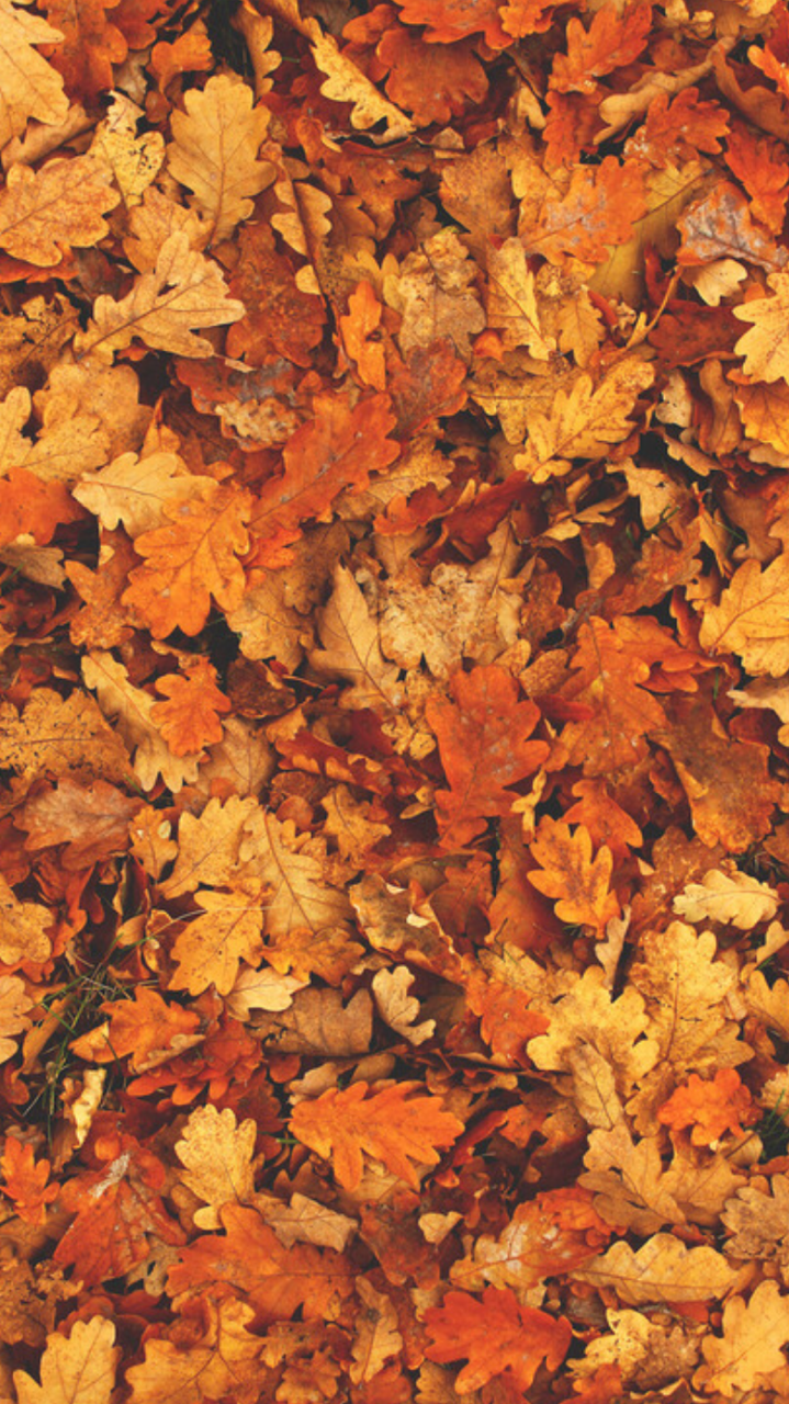 Autumn Wallpaper Tumblr Fall Wallpaper Fall Background Fall Backgrounds Tumblr