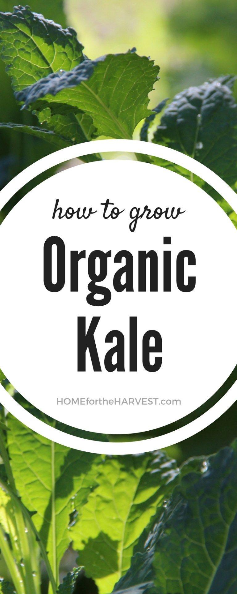 Growing kale indoors hydroponic growing organic