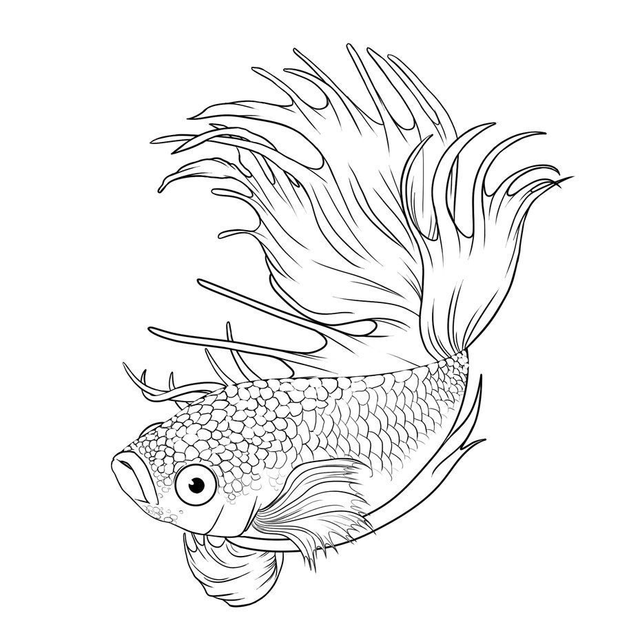 Betta Coloring Pages