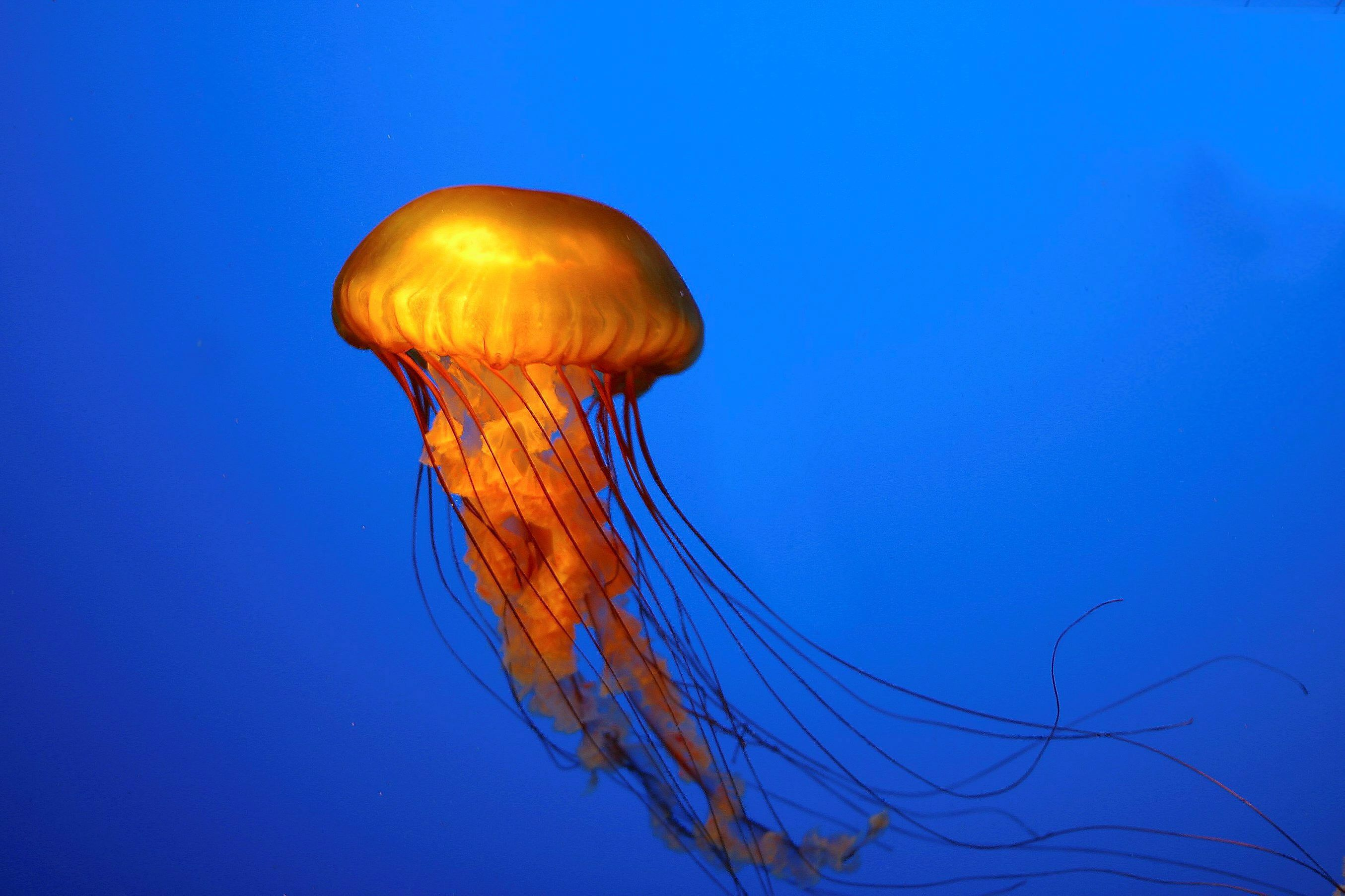 What do jellyfish eat and all you need to know about type for What do jelly fish eat