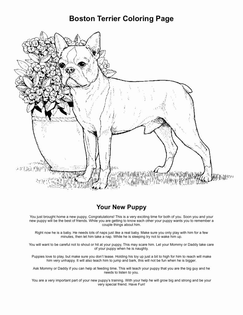 Free Printable Boston Terrier Coloring Pages Awesome Boston Terrier Coloring Pages Printable Coloring Home In 2020 Puppy Coloring Pages Coloring Pages Boston Terrier
