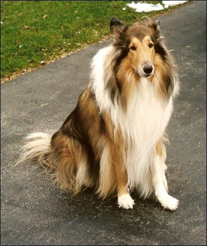 Pin On Stirling Collies Reviews