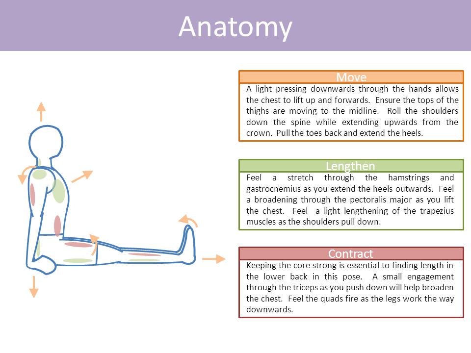 Staff - Dandasana | Yoga poses | Pinterest | Yoga, Yoga anatomy and ...