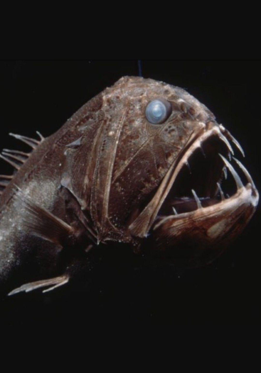 аллергики глубоководные животные фото из-за наличия минералов