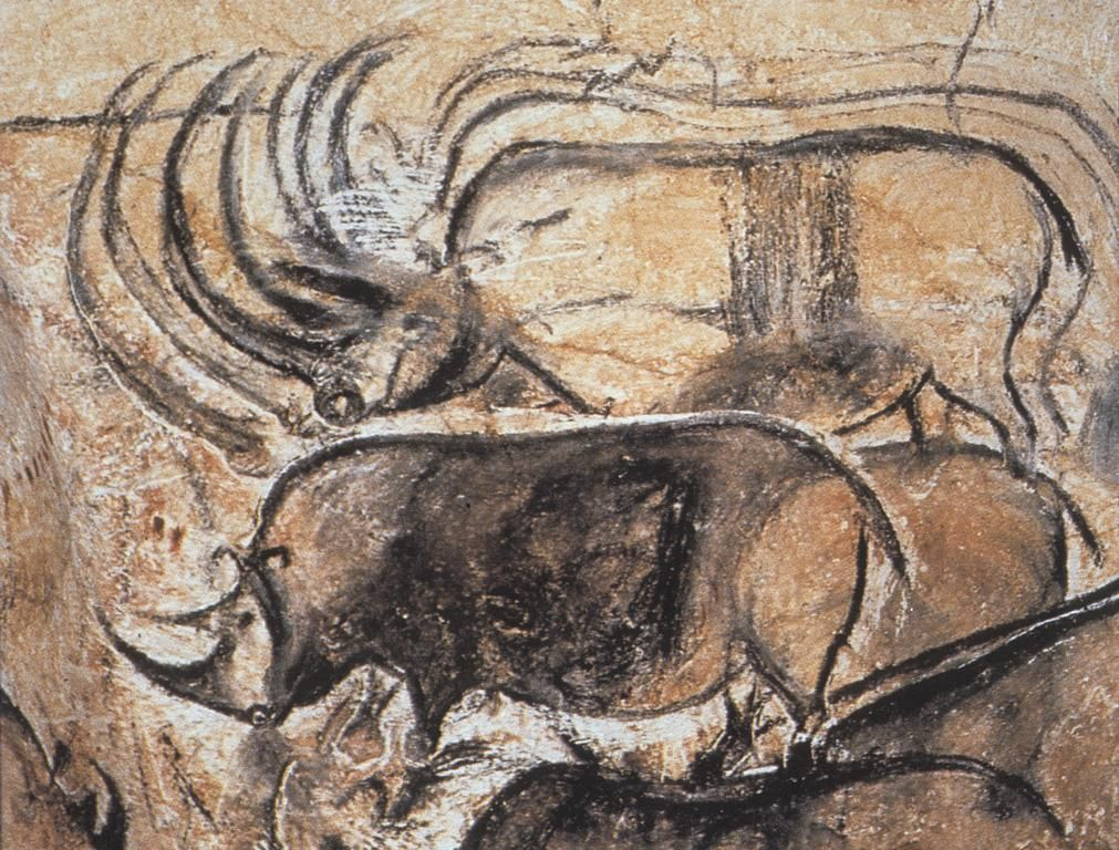 Rhinoceroses From Chauvet Cave C 30 000 Bce Amazingly Sophisticated Rendition Cave Paintings Chauvet Cave Prehistoric Cave Paintings