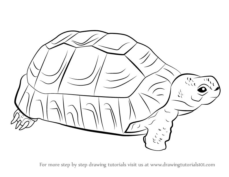 tortoise drawing for pinterest - photo #17