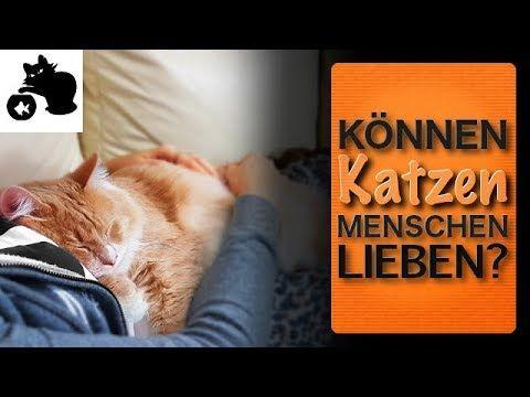 🔥Können Katzen Menschen lieben? Liebt meine Katze mich