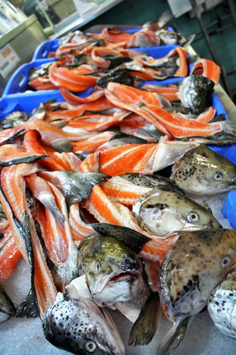 Sydney Fish Market Australia Growing Organic Food Fresh Food Market Food Market