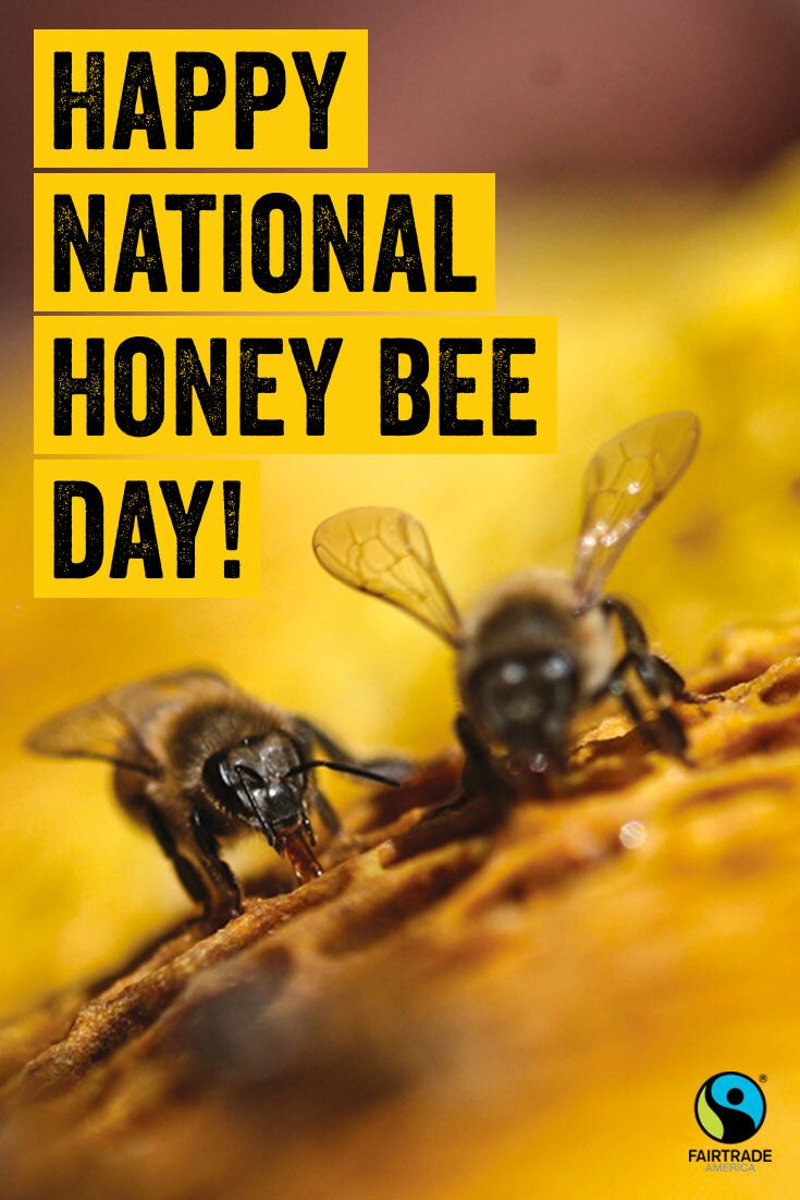 Happy National Honey Bee Day from Fairtrade America! | Bees