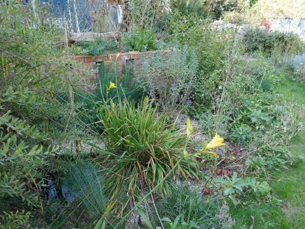 Unser Garten Im Herbst Fur Insekten Vogel Und Igel Hortus Girasole Garten Insekten Garten Ideen