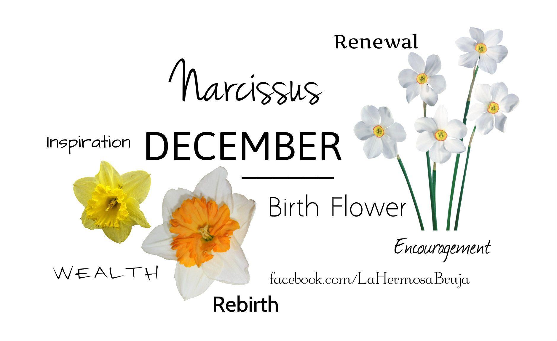December birth flowers december birth flower birth