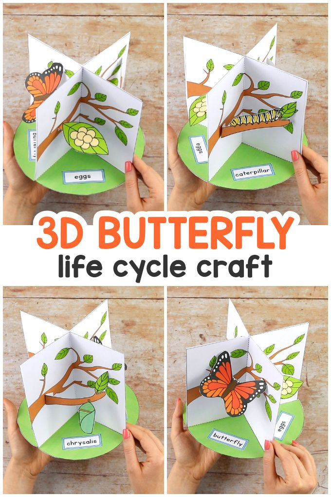 3d Butterfly Life Cycle Craft Easy Peasy And Fun In 2020 Butterfly Life Cycle Craft Life Cycle Craft Crafts