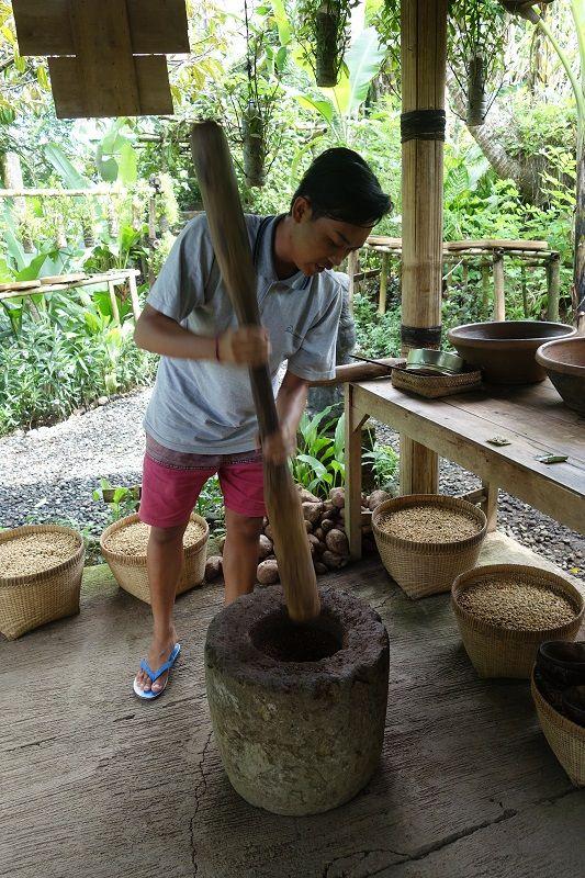 Kopi Luwak Tasting at Alas Harum Agro Tourism Kopi